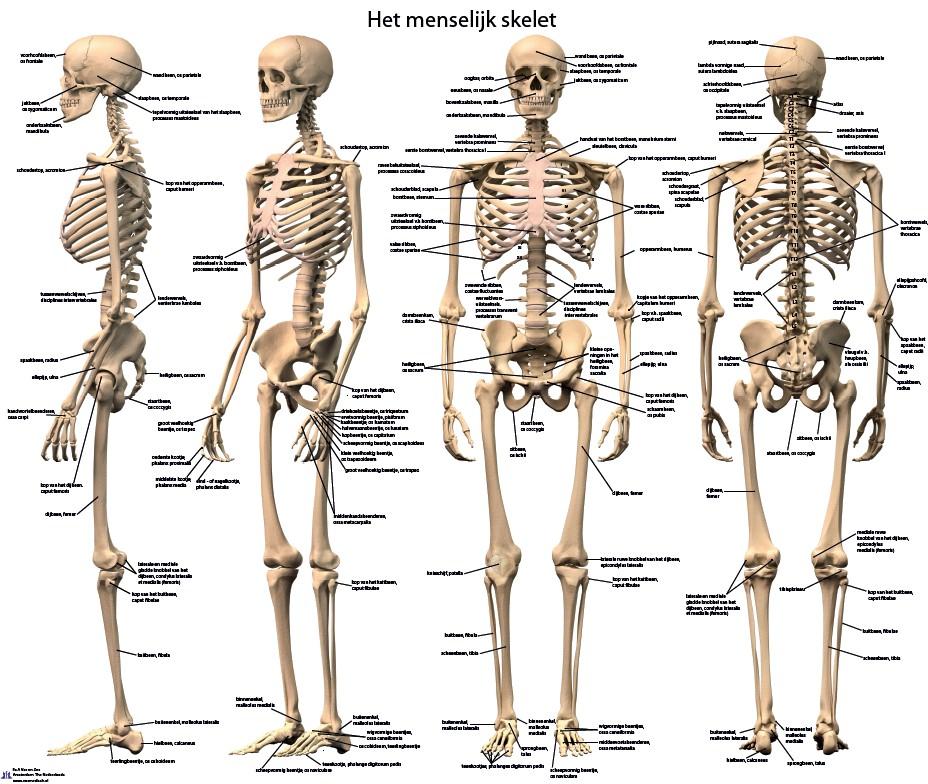 Ikje – Basisles anatomie